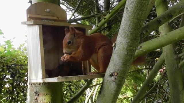 Eichhörnchen Futterhaus für die Hörnchen