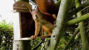 Eichhörnchen Kobel selber bauen