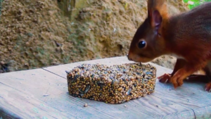 Eichhörnchen mit Herz