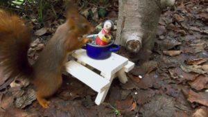 Eichhörnchen beim Weihnachtsengel