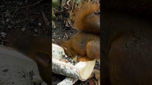 Eichhörnchen füttern im Winter #Shorts