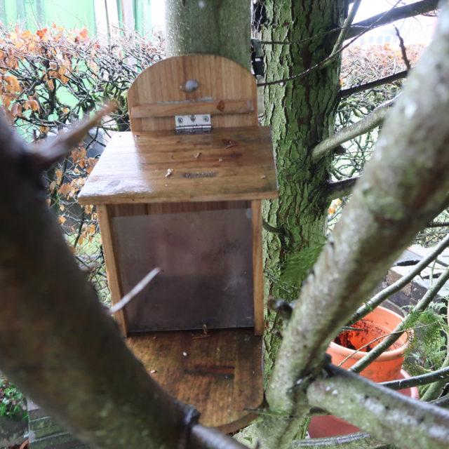 Eichhörnchen Futterhaus befestigen