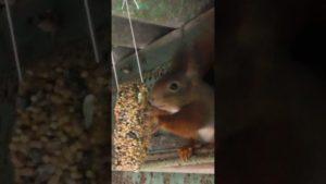 Mein Eichhörnchen im Garten #Shorts