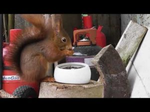 Videos for Cats to Watch – Squirrel Fun in December