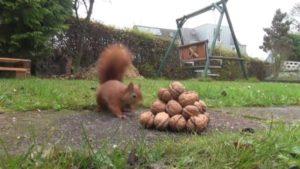 Eichhörnchen an der Nuss Pyramide | Teil 2
