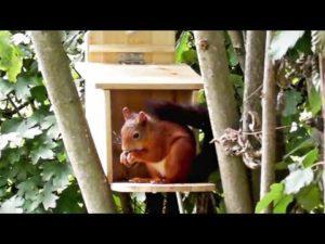 Eichhörnchen Futterhaus – Ein Eichhörnchen beim futtern im Garten