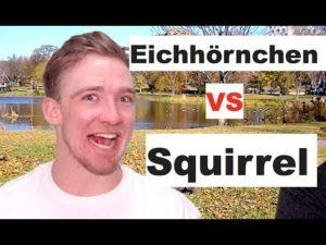 Wie spricht man Eichhörnchen aus