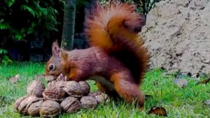 Squirrel Video for Cats